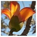 Плодовые деревья: свойства, уход, фото, характеристики - энциклопедия плодовых деревьев кустарников